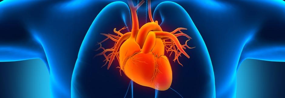 Wann kommt das Herz aus dem 3D-Drucker?