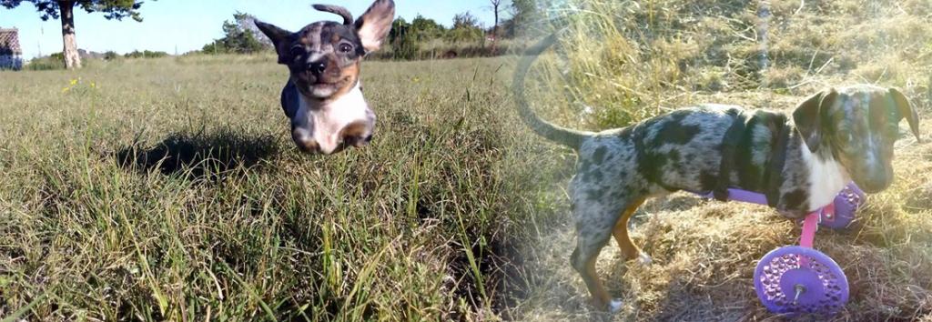 Neues Lebensgefühl: Wenn 3D-Drucker das Laufen ermöglichen