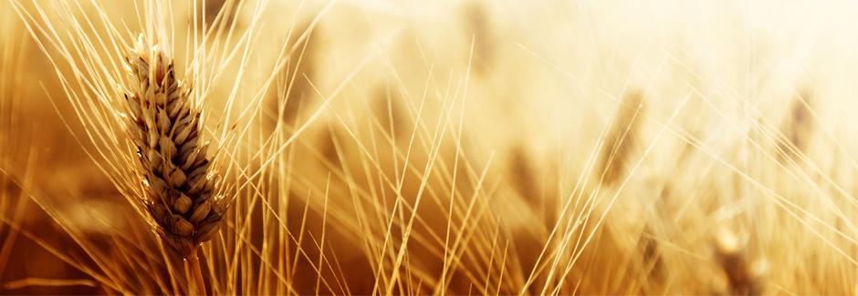 Filament aus Stroh und Reis als preiswerte Alternative